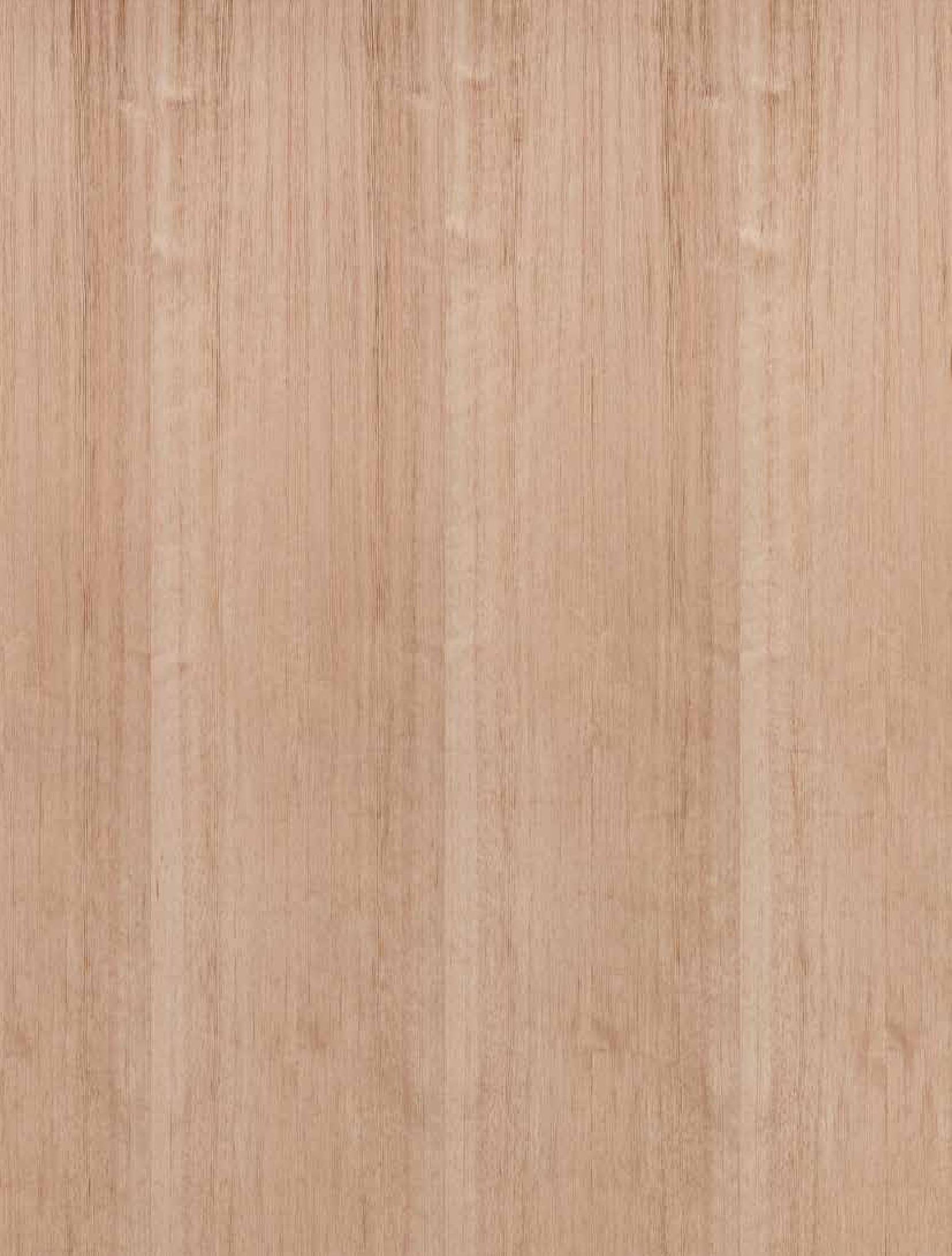 borovice rovnoletá